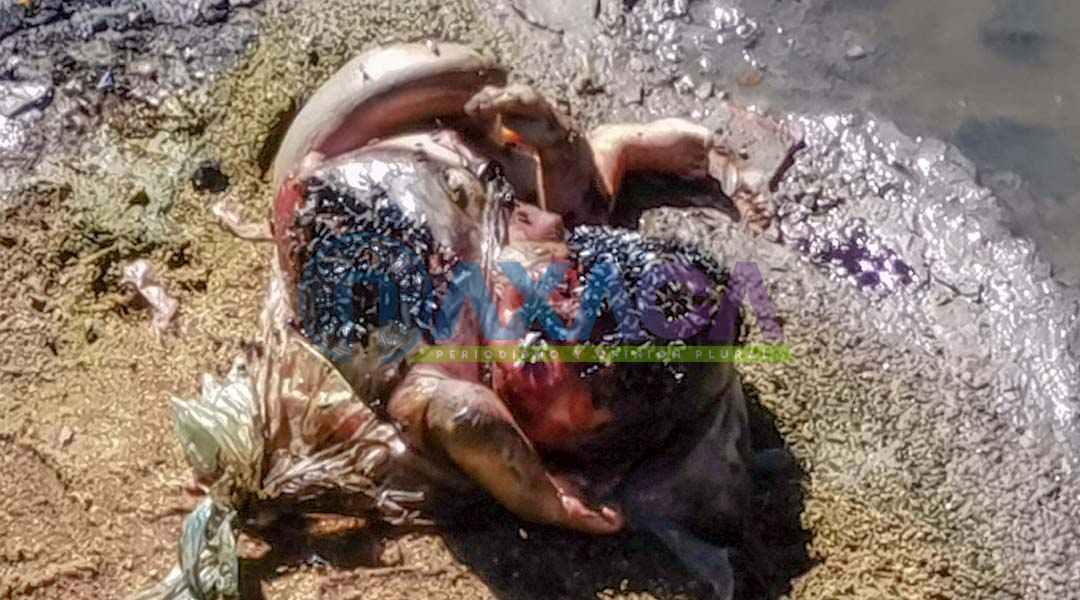 Localizan cuerpo de bebé en estado de putrefacción sobre el Río Atoyac