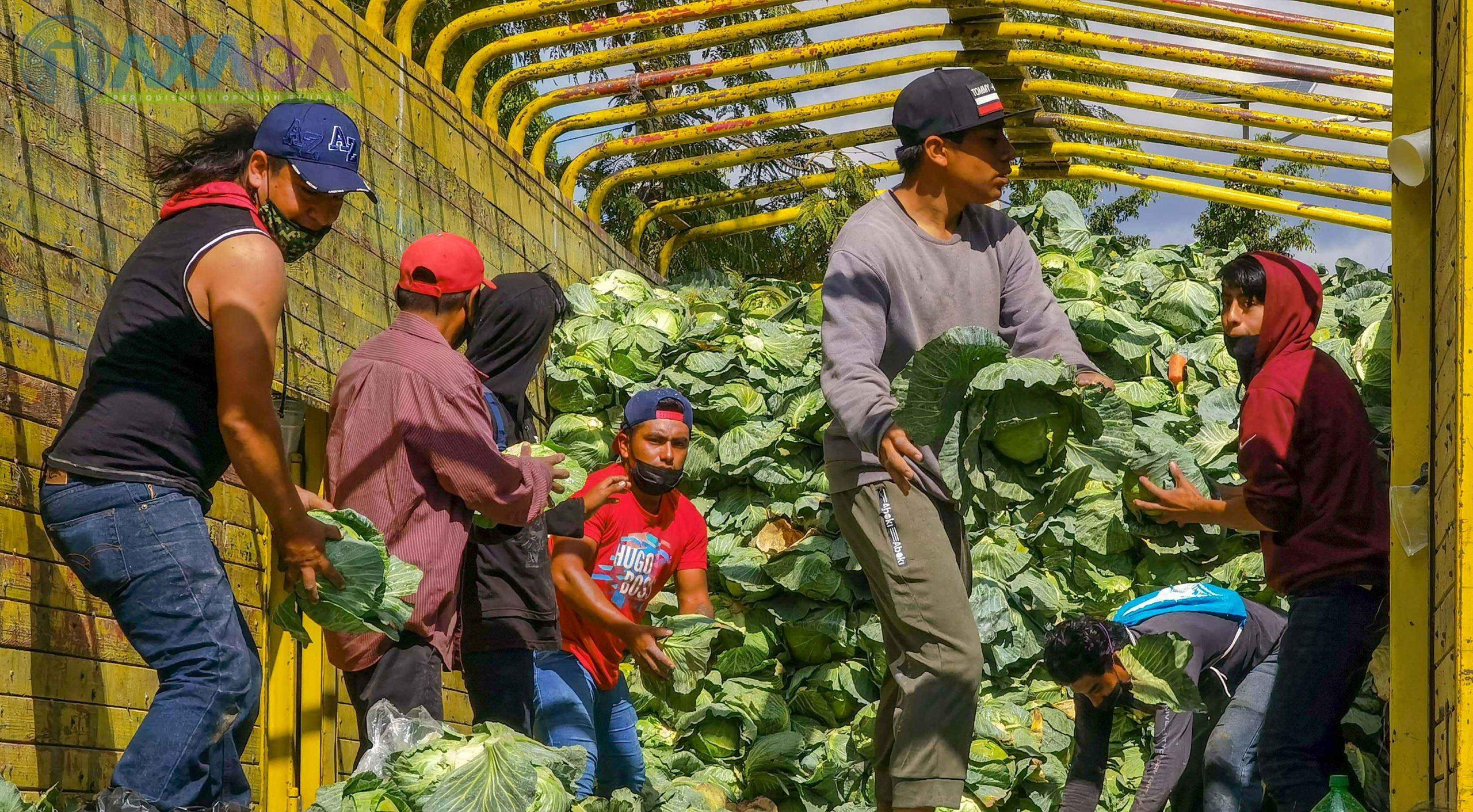 Nuevamente regalarán verduras agricultores de Puebla, ahora en San Juan Chapultepec, Oaxaca